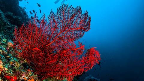 Mélytengeri korallkerteket fedeztek fel Ausztrália délnyugati részén