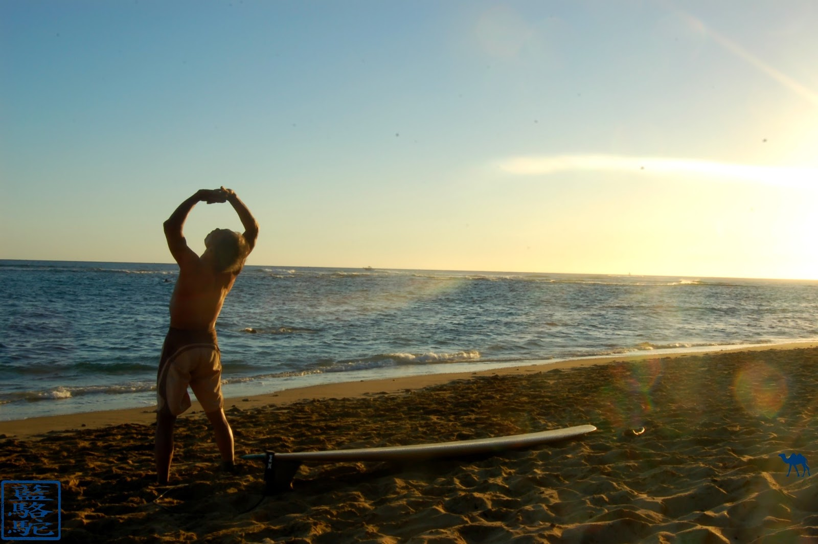 OHAU- le Chameau Bleu -Hawaii