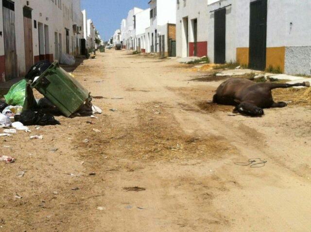 La otra cara del Rocío: 23 caballos muertos de agotamiento durante las fiestas