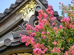 妙隆寺のサルスベリ