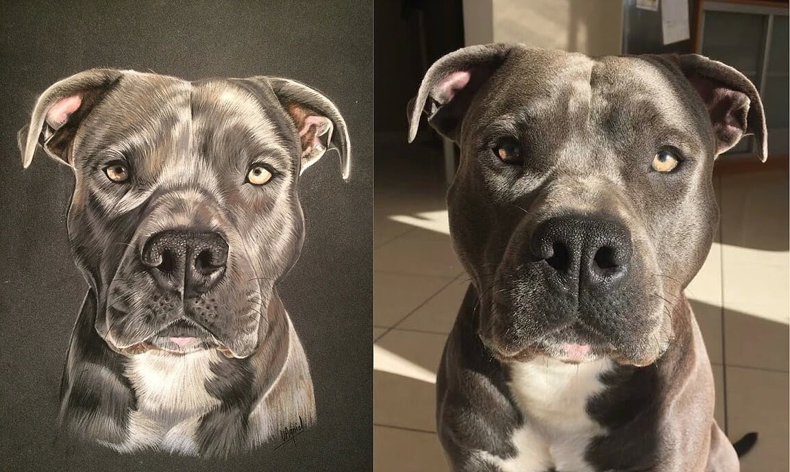 13-Drawing-vs-Photo-Dog-Virginie-Agniel-Pastel-Drawings-of-Cats-and-Dogs-www-designstack-co