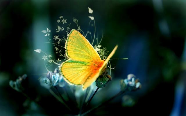 Mooie gele vlinder op een bloem
