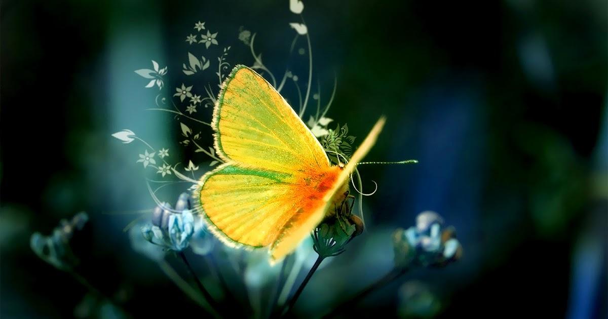 Mooie gele vlinder op een bloem | Bureaublad Achtergronden
