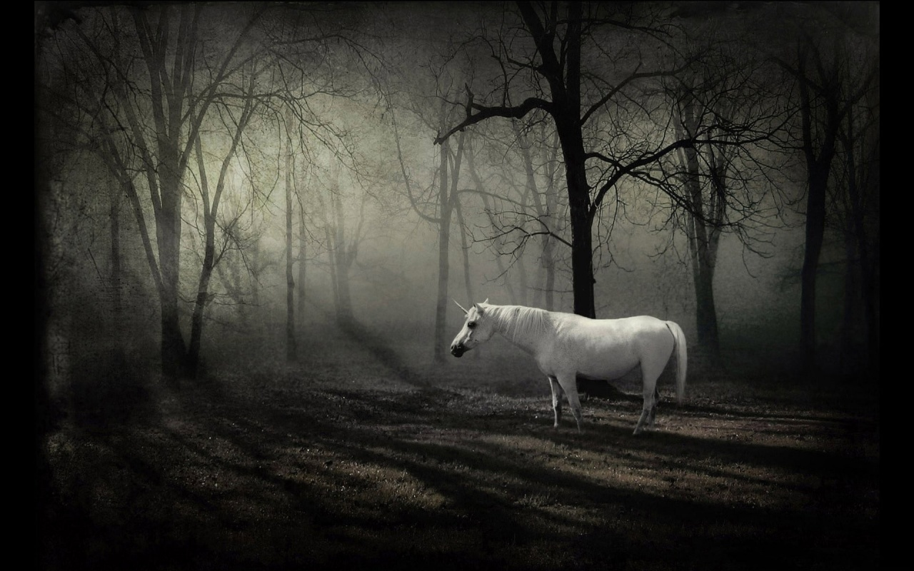 Great   Wallpaper Horse Forest - Fantasy-White-Horse-in-the-Forest-wallpaper  Pictures_20169.jpg