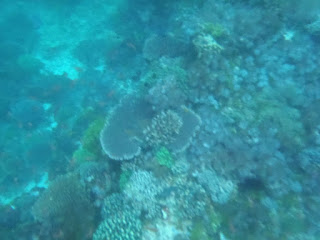 terumbu karang pulau kepa Alor NTT