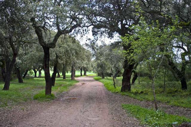 rutas-andalucia-sierra-morena