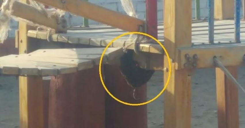 Cientos de abejas crean pánico en colegio «Villa Kids», Distrito de José Leonardo Ortiz - Lambayeque