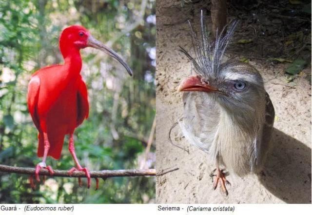 Estrutura de Populações e Manejo Sustentável de Fauna na Natureza e em Semiliberdade