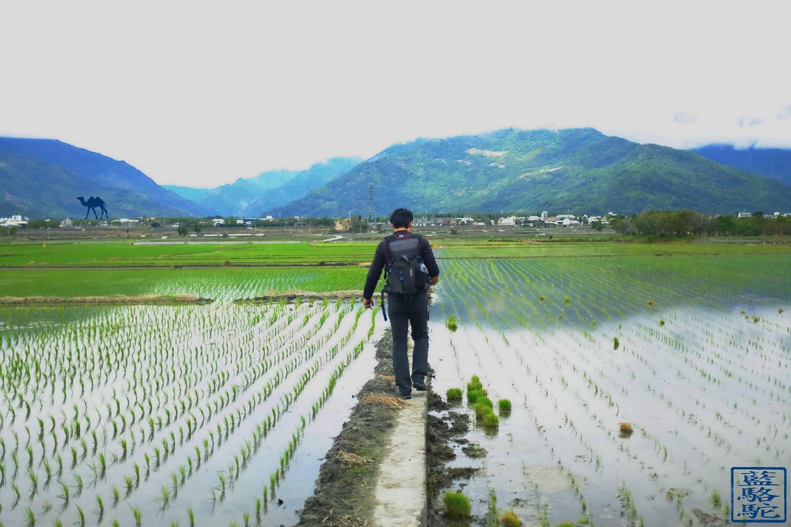 Le Chameau Bleu - Thule Perpektiv dans les rizières - Taiwan