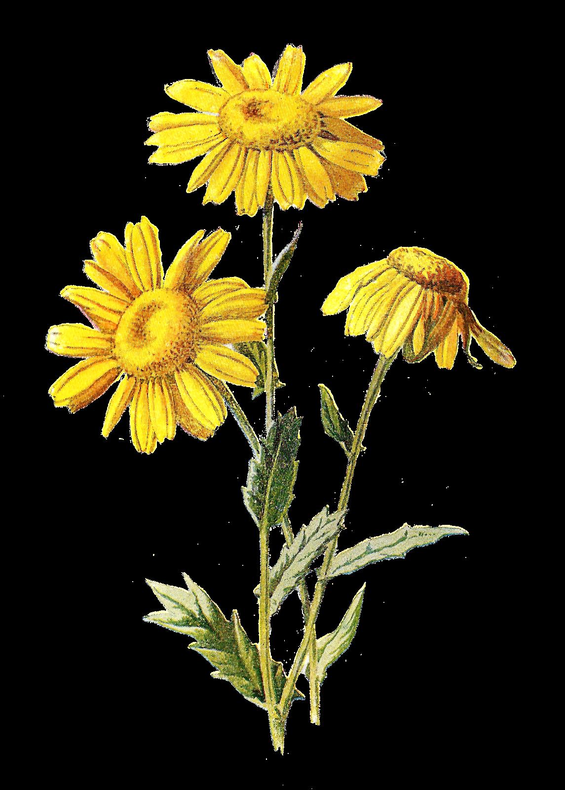 ... Digital Wildflower Downloads Printable Flower Clip Art Illustrations