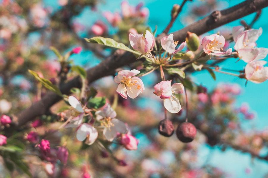 wiosenne pąki na drzewie