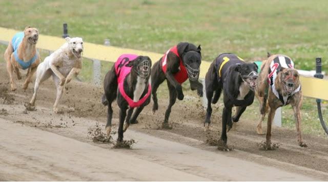 nueva ley que prohíbe las carreras de cualquier raza de perros.