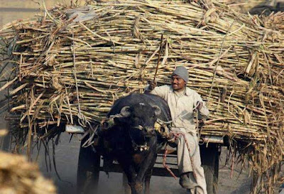 Soft Loan To Sugar Industry