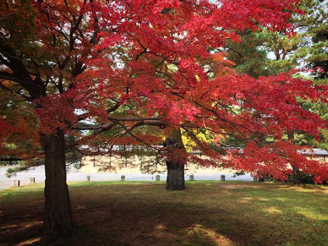 京都御所の紅葉