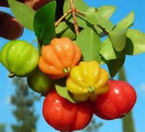 Pitanga - Benefícios medicinais da cereja brasileira