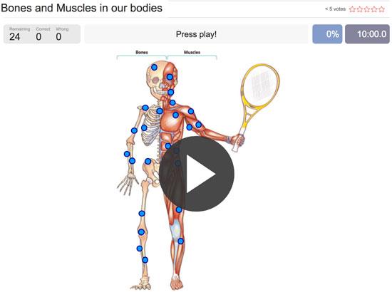 Juego para identificar los huesos y músculos del cuerpo humano en inglés
