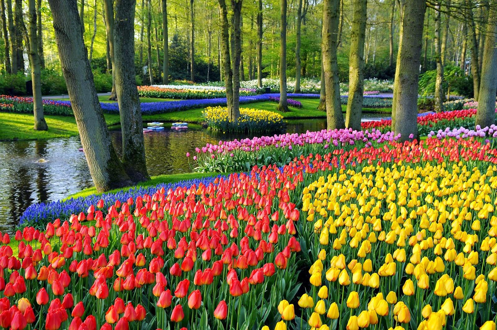 Fakta Dunia Terbaru: 9 Taman Bunga Terindah di Dunia