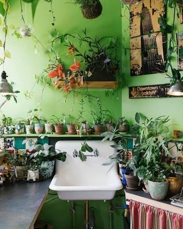 Muchas plantas en maceta en apartamento con paredes verdes