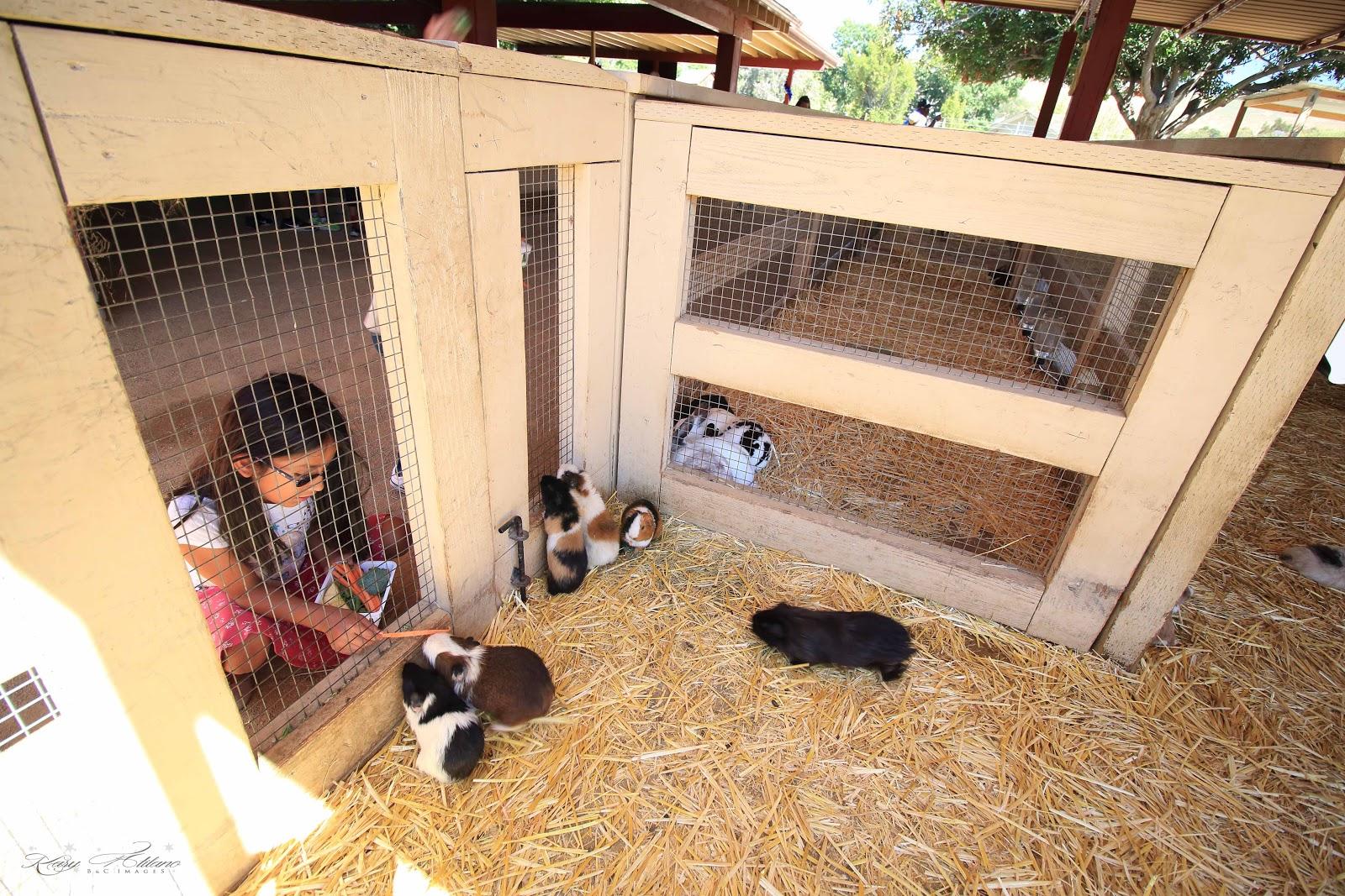 Bc Images Zoomers Petting Zoo San Juan Capistrano