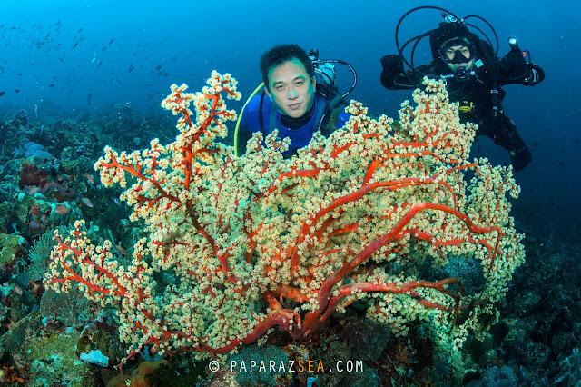 Learn Scuba, Underwater Photography, Padi