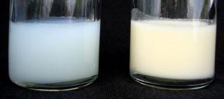 Verdades sobre la leche del inicio y la leche del final