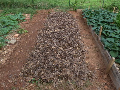 Hugelkultur swale bed complete and mulched with leaves.