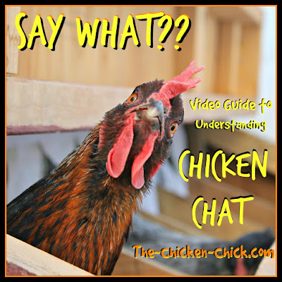 How chickens communicate: a video guide