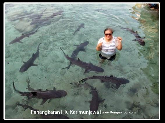 Wisata Penangkaran Ikan Hiu Pulau Karimunjawa Murah