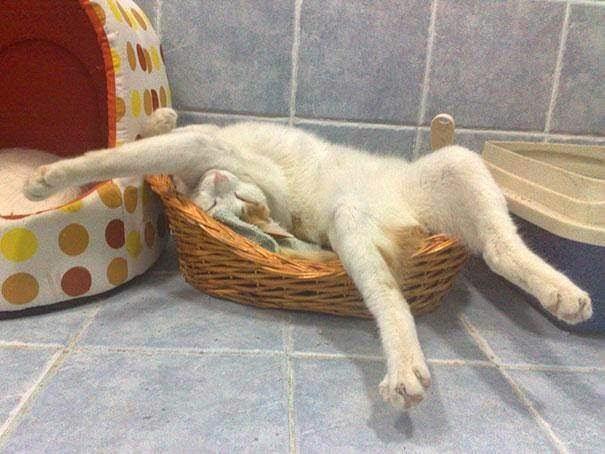 أطرف أوضاع نوم للقطط