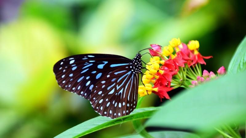 1st Butterfly