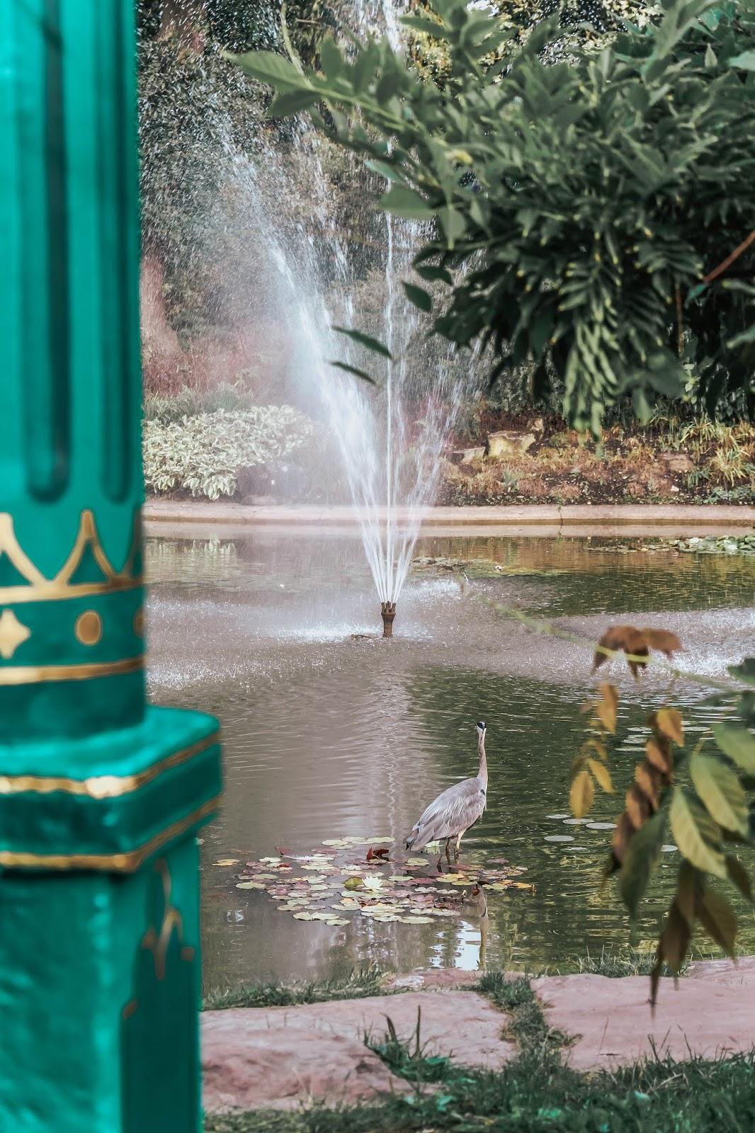 Herron at Cliveden House Hotel Garden