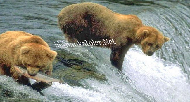 Vahşi Doğadan Avlanma Anları 2