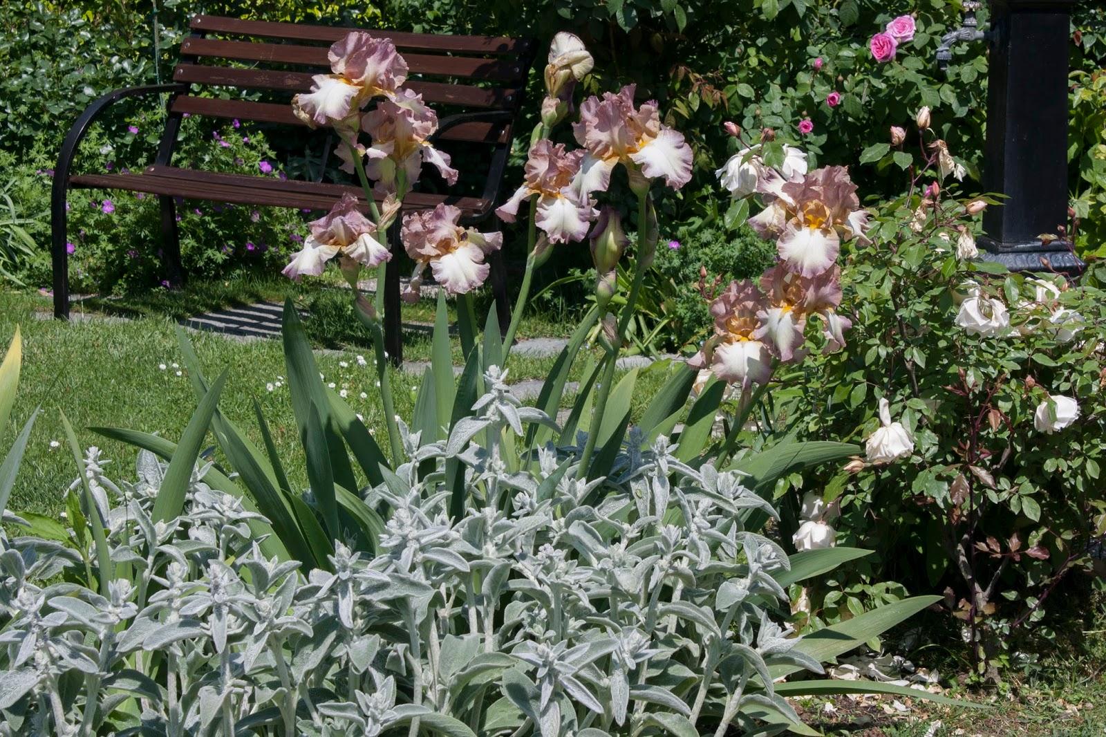 Immagini di giardini fioriti for Immagini di piccoli giardini