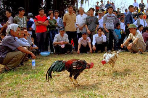 Vietnamese New Year 28