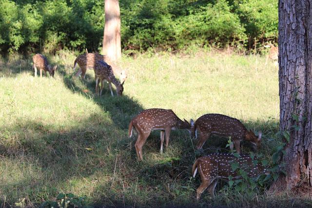 Kerala, travel, Wayand Diaries, Wayanad, Mysore, Sulthan Bathery, Bandipur Tiger Reserve, Himavad Gopalaswamy Betta, Gopala Swamy Betta, Nanjangudu