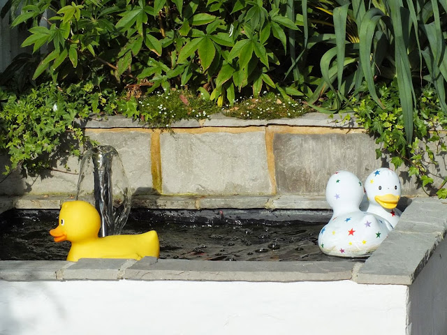 Rubber Ducks on the pond