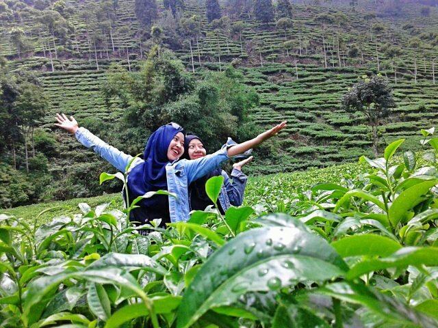 Gambar Kebun Teh Jamus Ngawi Rute Dan Lokasi Kebun Teh Jamus Ngawi Yang Punya Borobudur Hills