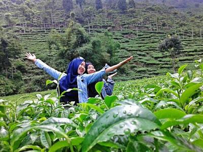 Rute Dan Lokasi Kebun Teh Jamus Ngawi