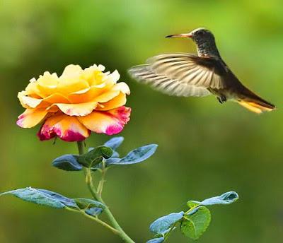 Resultado de imagem para a flor