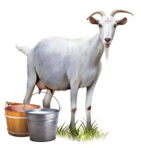 benefit of goat milk for health