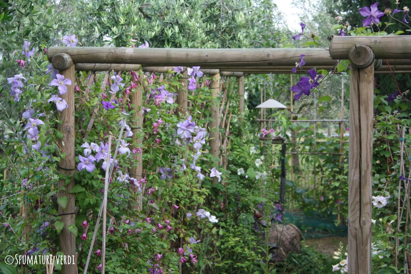 Rampicanti fioriti resistenti al freddo piante rampicanti for Siepi perenni fiorite