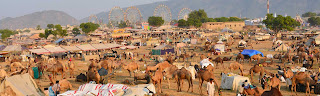 pushkar-fair-festival-in-ajmer-rajasthan