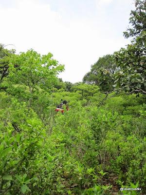 El bosque subcaducifolio, el terror de los excursionistas!