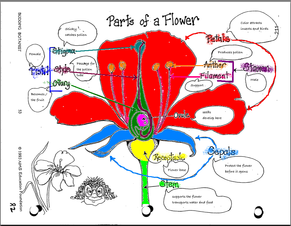 Parts Of A Flower Picture Laura Williams – Parts of the Flower Worksheet