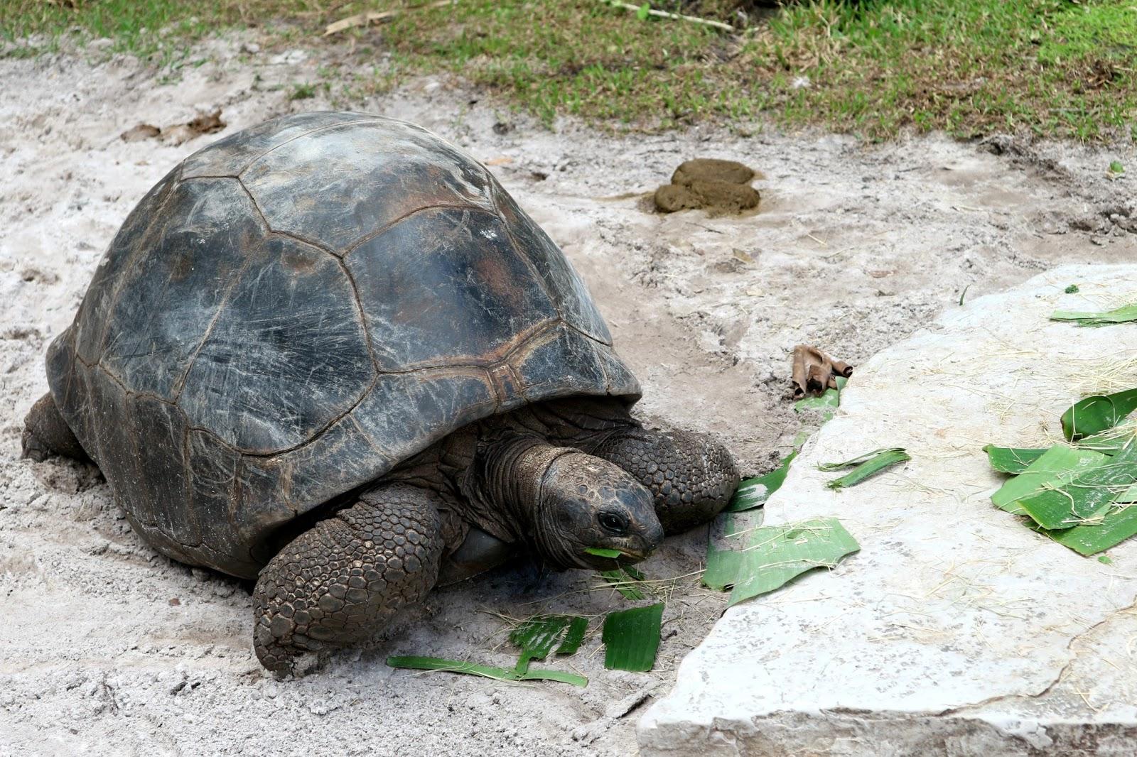 Busch Gardens Giant Tortoise