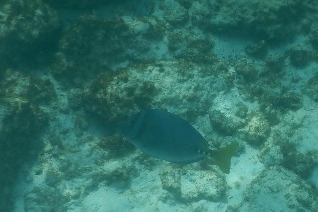 Gardner Bay snorkel
