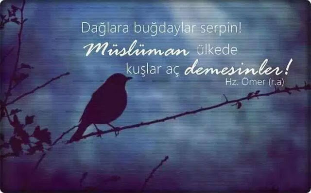 kuş, dal, gökyüzü, kuşlar, ağaç