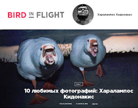 dirtyharrry in birdinflight