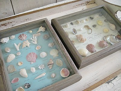 Themes For Baby Room Seashell Displays