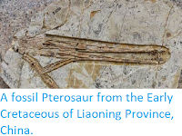 http://sciencythoughts.blogspot.co.uk/2014/05/a-fossil-pterosaur-from-early.html